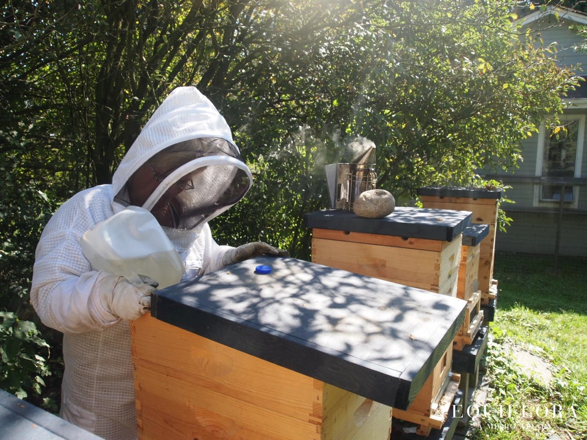 Janne feeding syrup to one of the weaker hives.