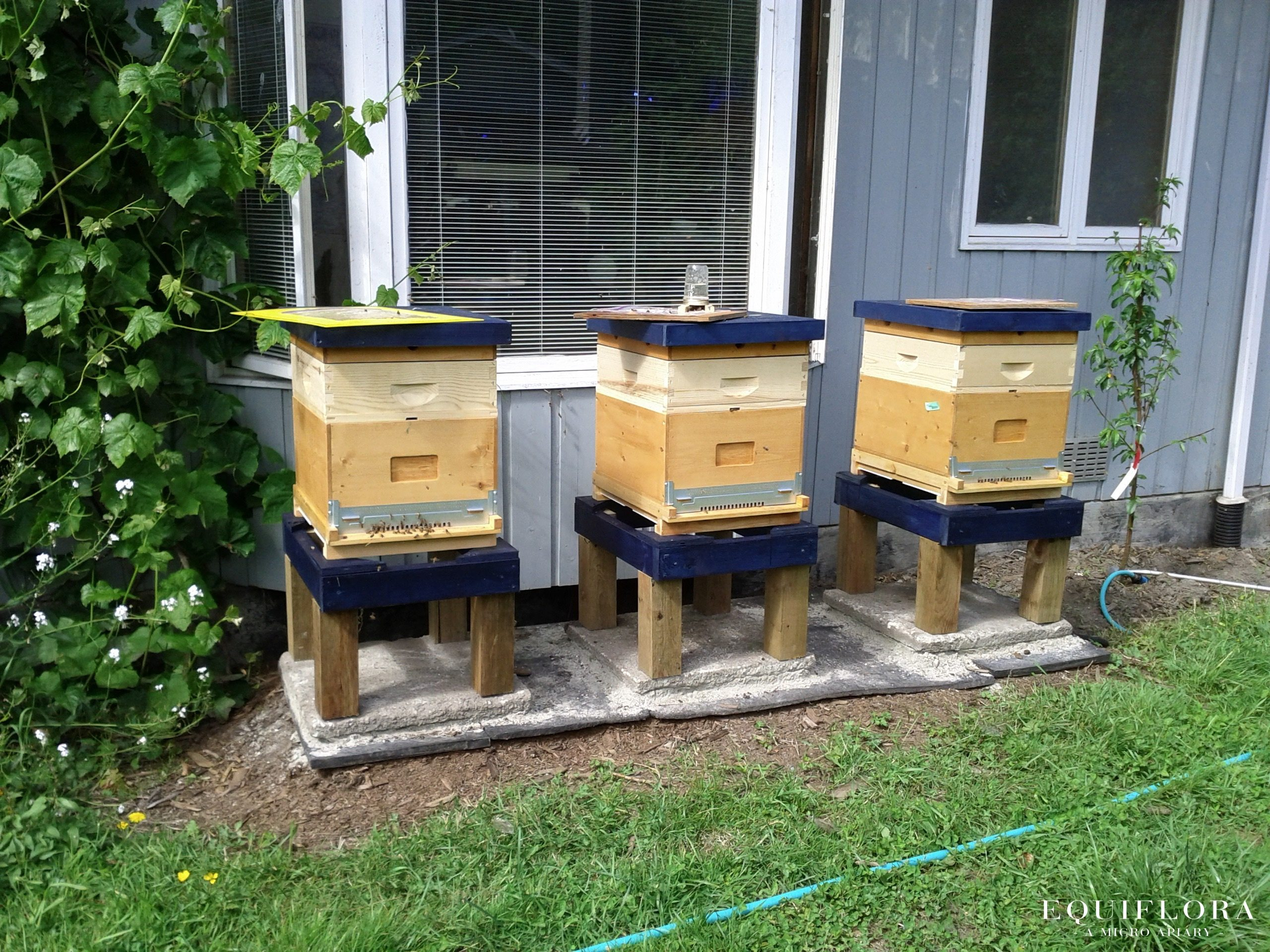 Our new hives wearing their honey supers.