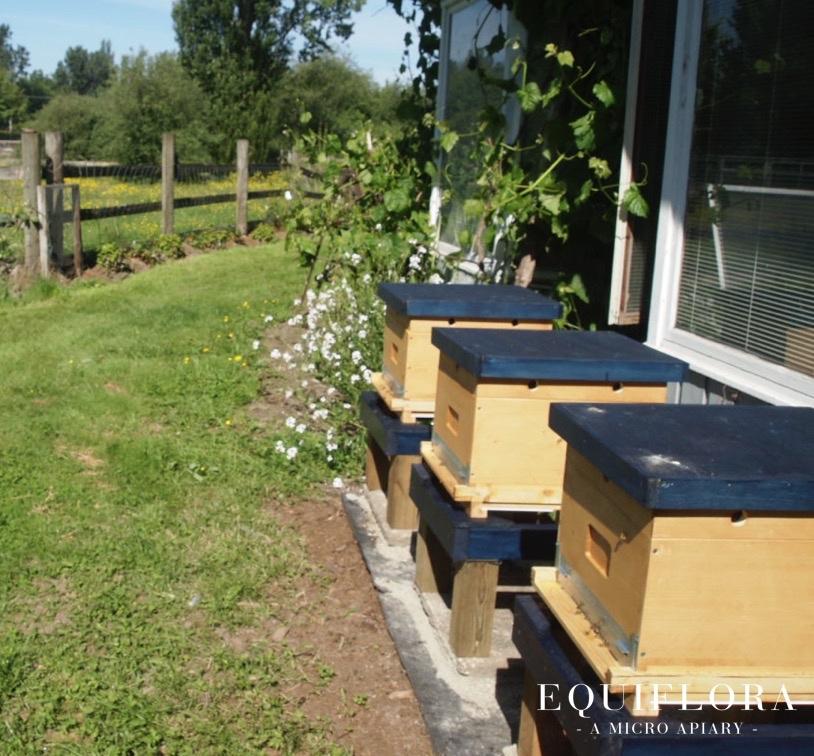 Our first hives the morning after they were installed.