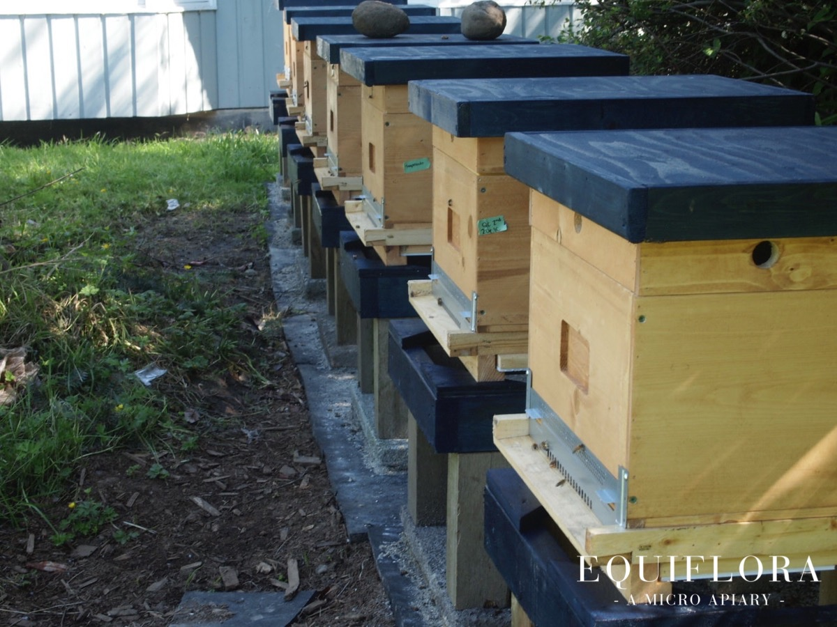 Our new nucleus hives.