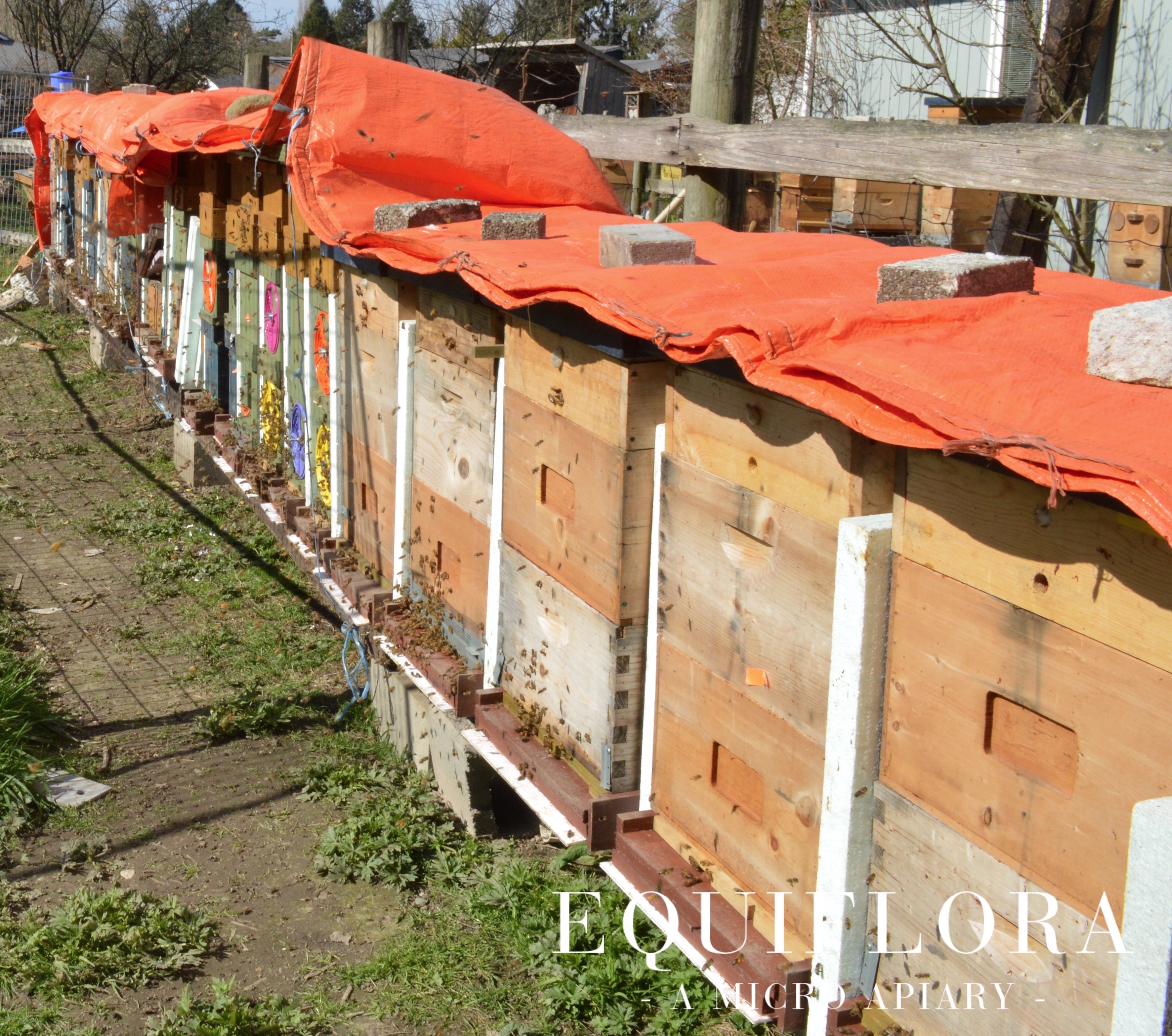 The pared down hives of winter. Lots of bees flying!